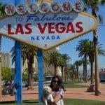 Viva Las Vegas: Part 1